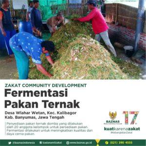 Proses Pembuatan Fermentasi Pakan ternak Oleh Kelompok Program ZCD Baznas Indonesia