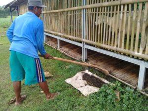 """Anggota kelompok Ternak Binaan Baznas Indonesia Sedang Mengumpulkan Kompos Ternak Domba """"Menda Karya"""" Desa Wlahar Wetan"""